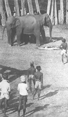 George Orwell's Shooting an Elephant as an Attack on Colonialism and Imperialism ESSAY